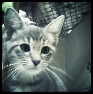 Questions to Ask Before Adopting A Kitten