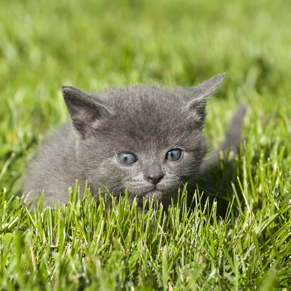 Should Your New Kitten Go Outside?