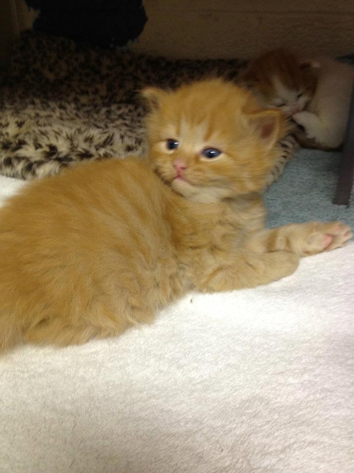 Adopting a Kitten this Spring